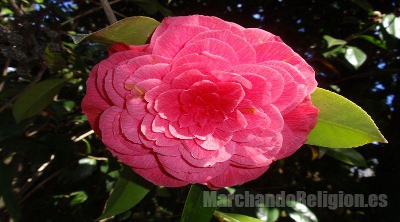 Flor de hoy-MarchandoReligion.es