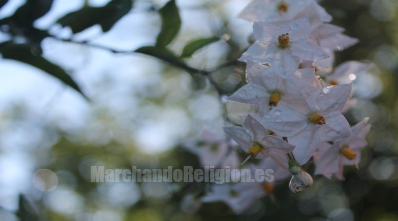 John Henry Newman Calixta-MarchandoReligion.es