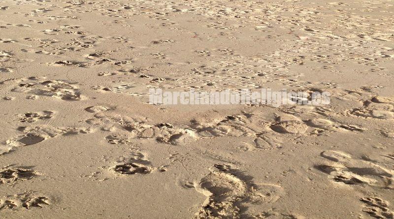 Las tentaciones del desierto-MarchandoReligion.es