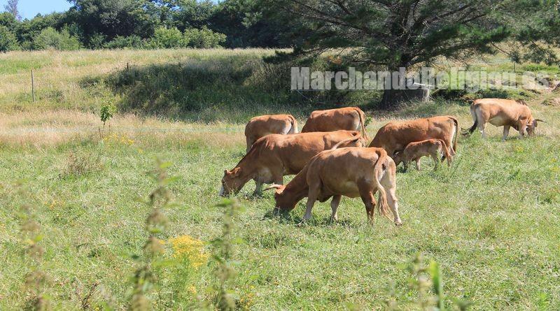 Animalismo-MarchandoReligion.es