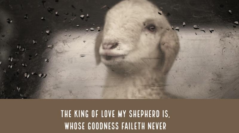 El rey del amor-MarchandoREligion.es
