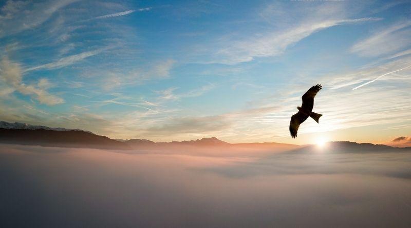 Con alas de águila. El Apocalipsis, el gran libro de la esperanza-MarchandoReligion.es
