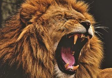 ¡No hay vidas que no sean dignas! El León que rugía a Hitler-MarchandoReligion.es