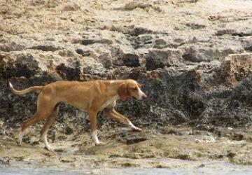 Perros perdidos sin collar-MarchandoReligion.es